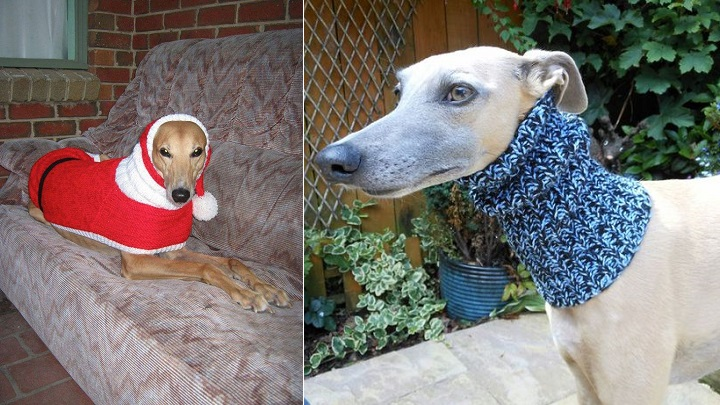 Jan Brown galgos1