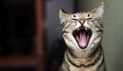 gato aliento