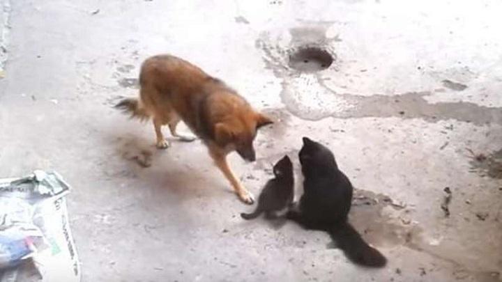 gato y perro callejeros
