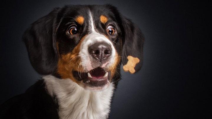 perros comiendo fotos