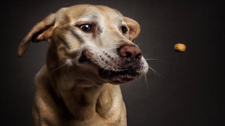 perros comiendo fotos1