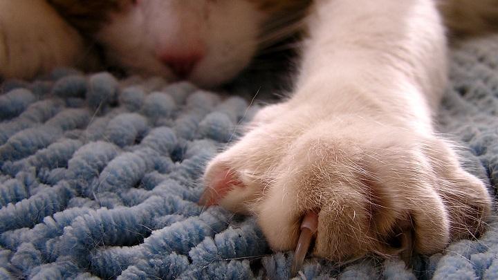 unas gatos1