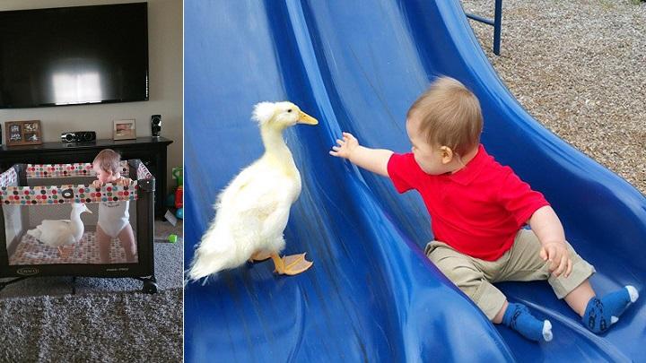 bebe y pato1