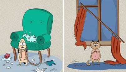 diferencias perros gatos5