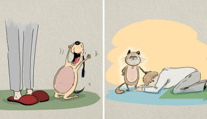 diferencias perros gatos6