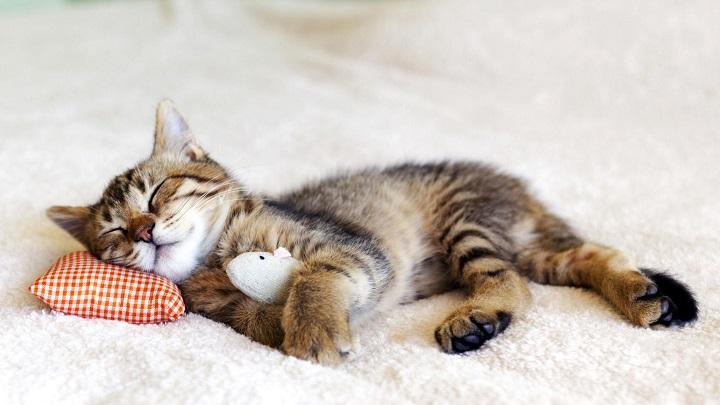 gato durmiendo1