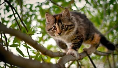 gato en un arbol