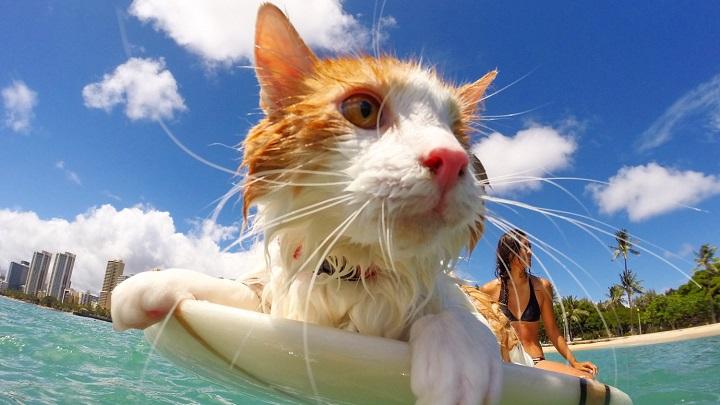 gato surf