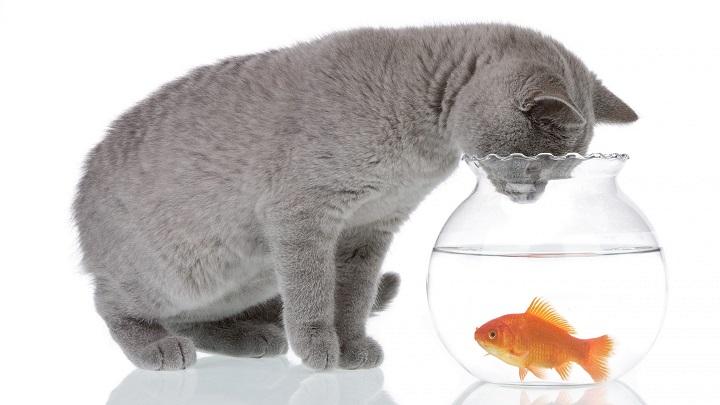 gatos mitos alimentacion1