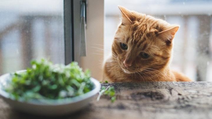 gatos mitos alimentacion2