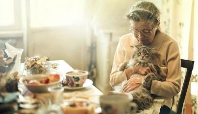 mascotas ancianos