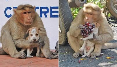mono cachorro foto