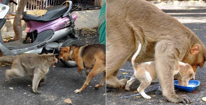 mono cachorro foto1