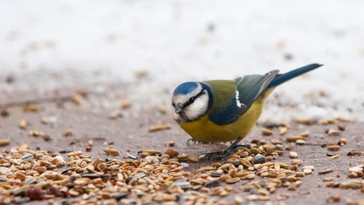 pájaro comiendo