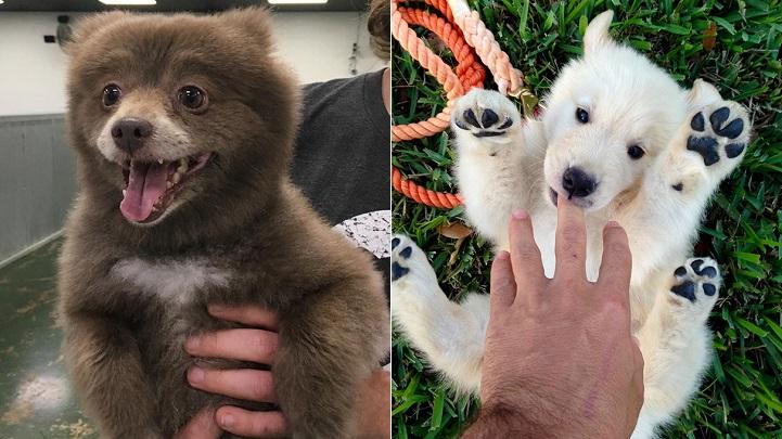 perros ositos de peluche foto