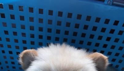 perros ositos de peluche14