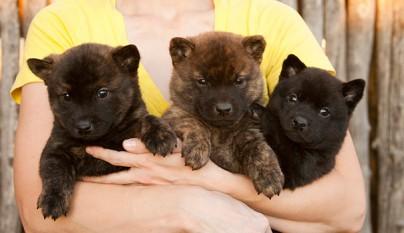 perros ositos de peluche6