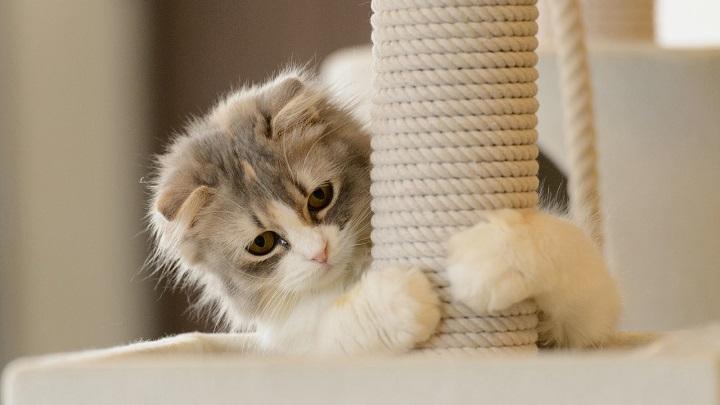 rascadores gato