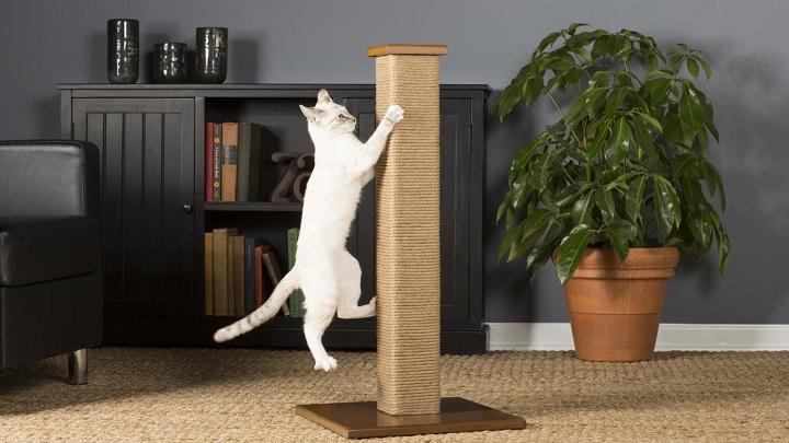 rascadores gato1