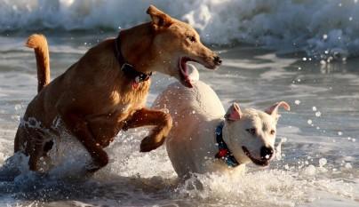 suplementos perros