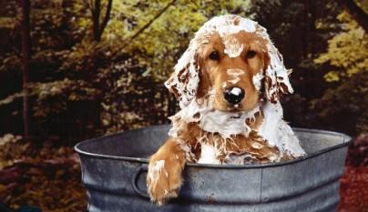 bano cachorro