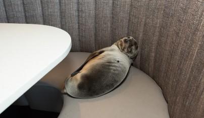 leon marino restaurante