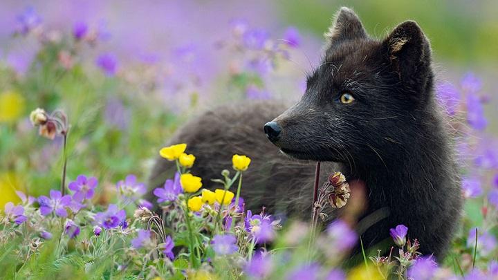 zorros negros foto1