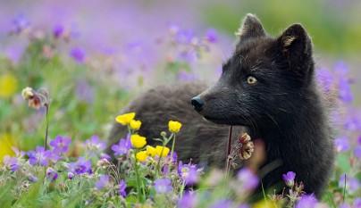 zorros negros13