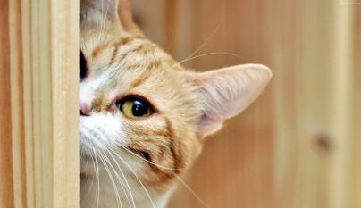 gato alzheimer