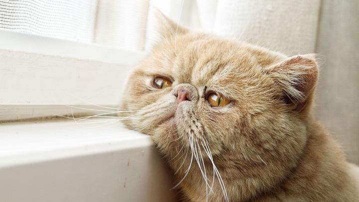 gato alzheimer1