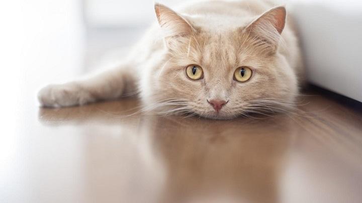 gato mayor1