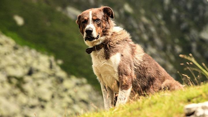 grupo sanguineo perro1