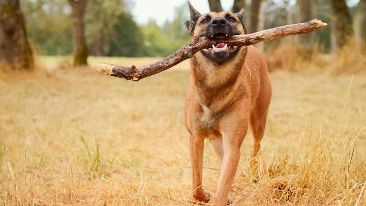 palo perro