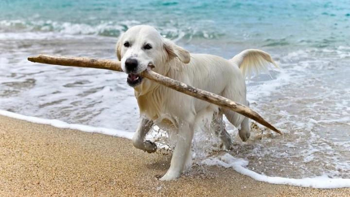 palo perro1