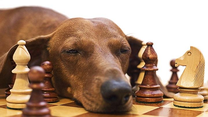 perro inteligencia1