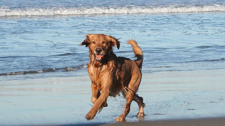 perro playa barcelona1