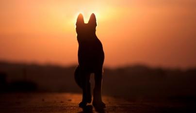 perro tras fallecimiento