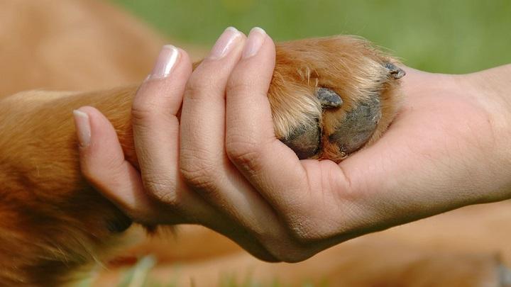 perro tras fallecimiento1