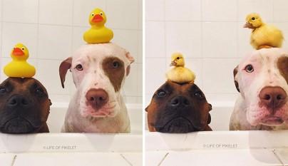 amistad patos perros2