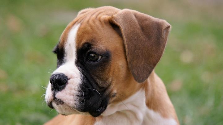 garrapata perro enfermedades