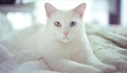 gato tumores1