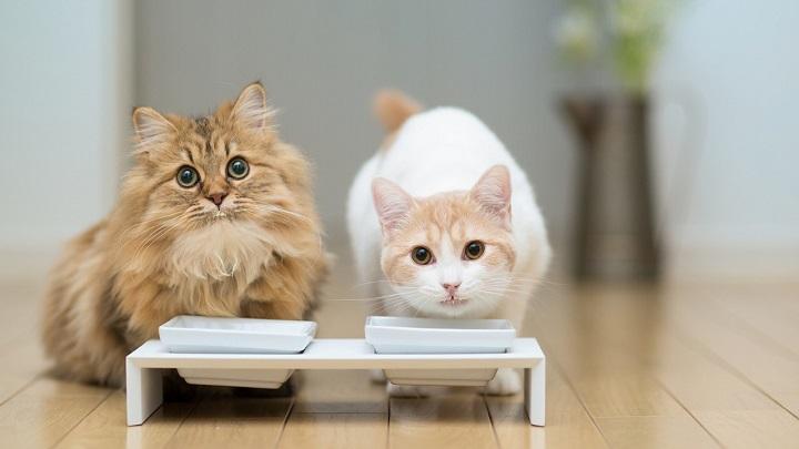 gatos gusto