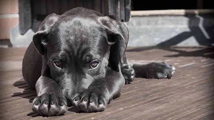 picaduras perros1