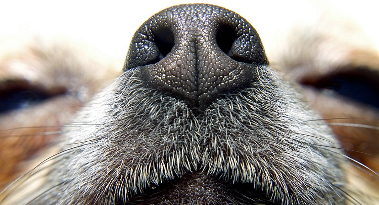 colonia perros1