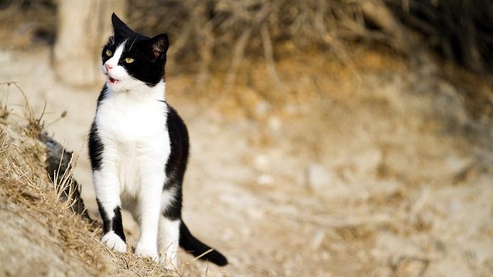 gato serpeinte sapo