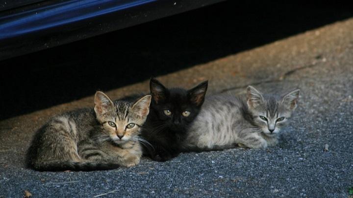 gatos callejeros musica
