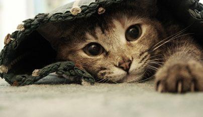 gatos espana