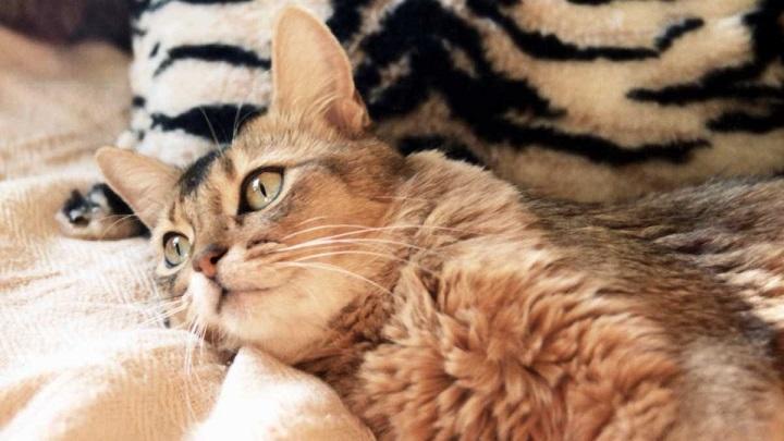 lombrices gatos1