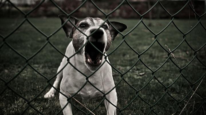 perro ladrando