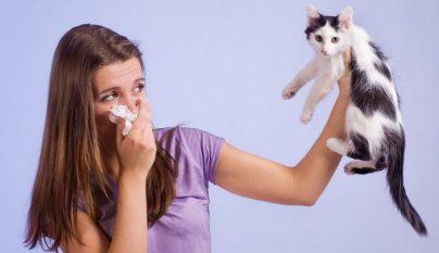 alergia perros gatos